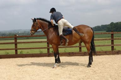 horsedismount
