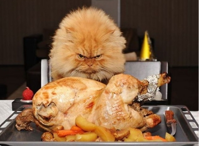 angry_cat_looking_at_turkey