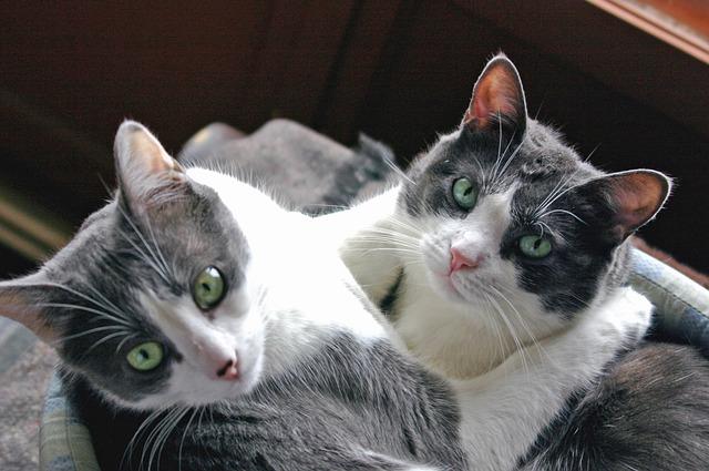 cat-2640940_640