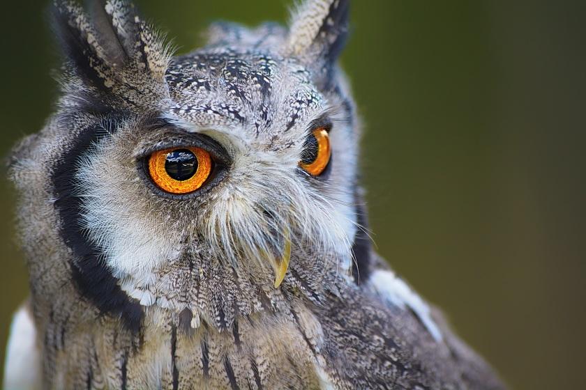 owl-1705112