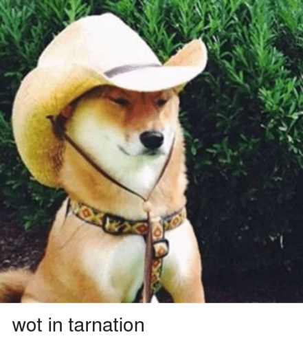 wot-in-tarnation-14000956
